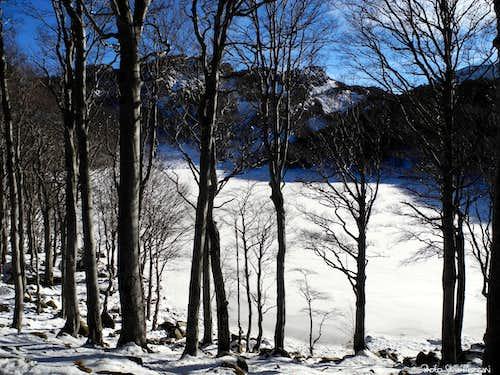 Beech-wood around Lago Santo (Holy Lake)