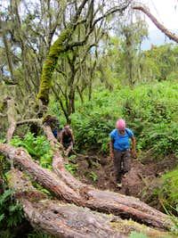 Muddy trail - Bisoke