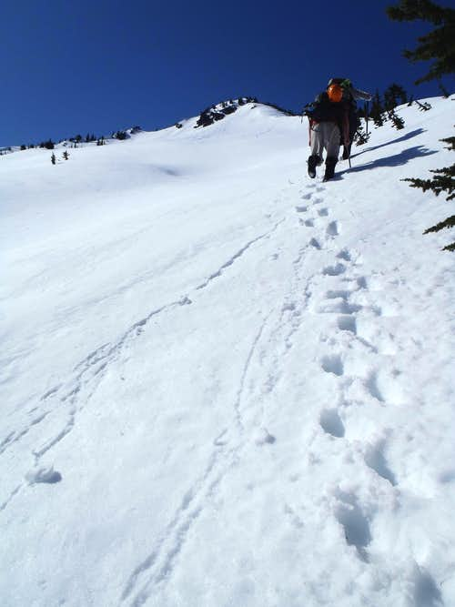 Ascending Gully Near Jim Hill Mountain