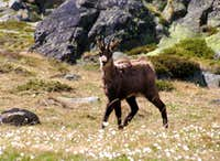 Fauna in Aosta Valley