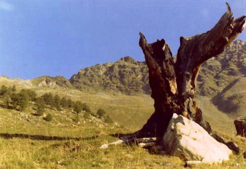 Senevé's Comba Ancient Tête of Arpisson & Old Tree 1971