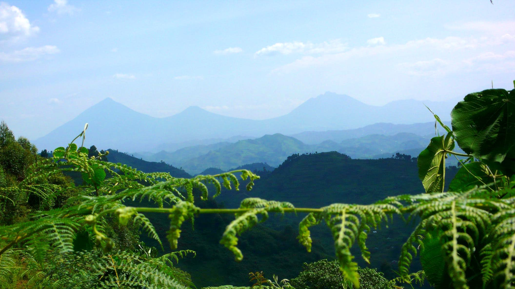 Virunga Volcanoes