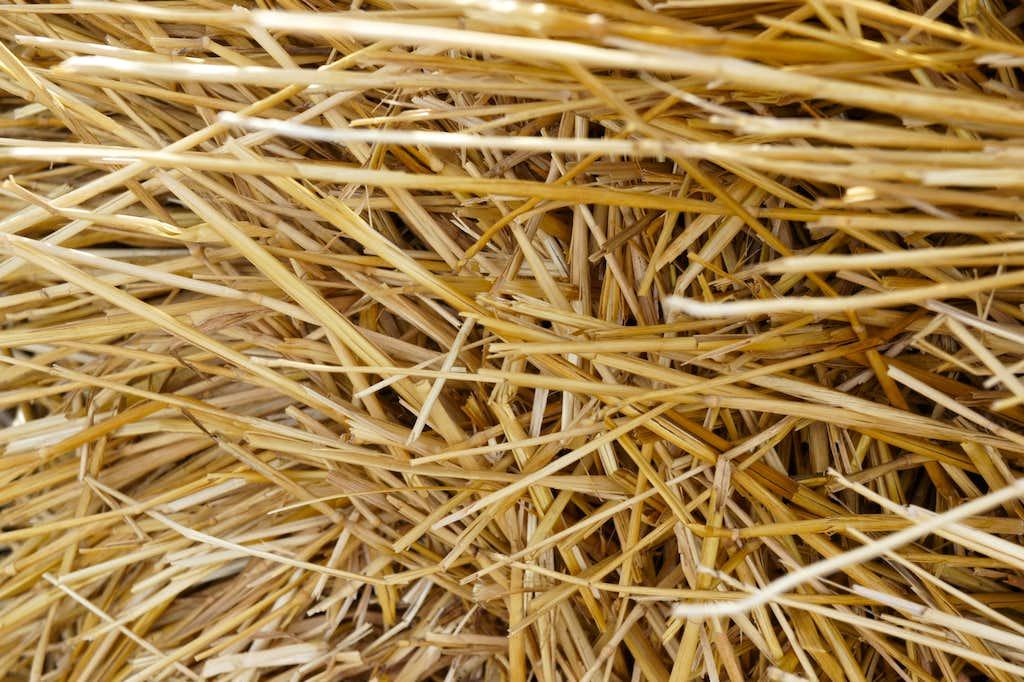 Hey! or is it hay??
