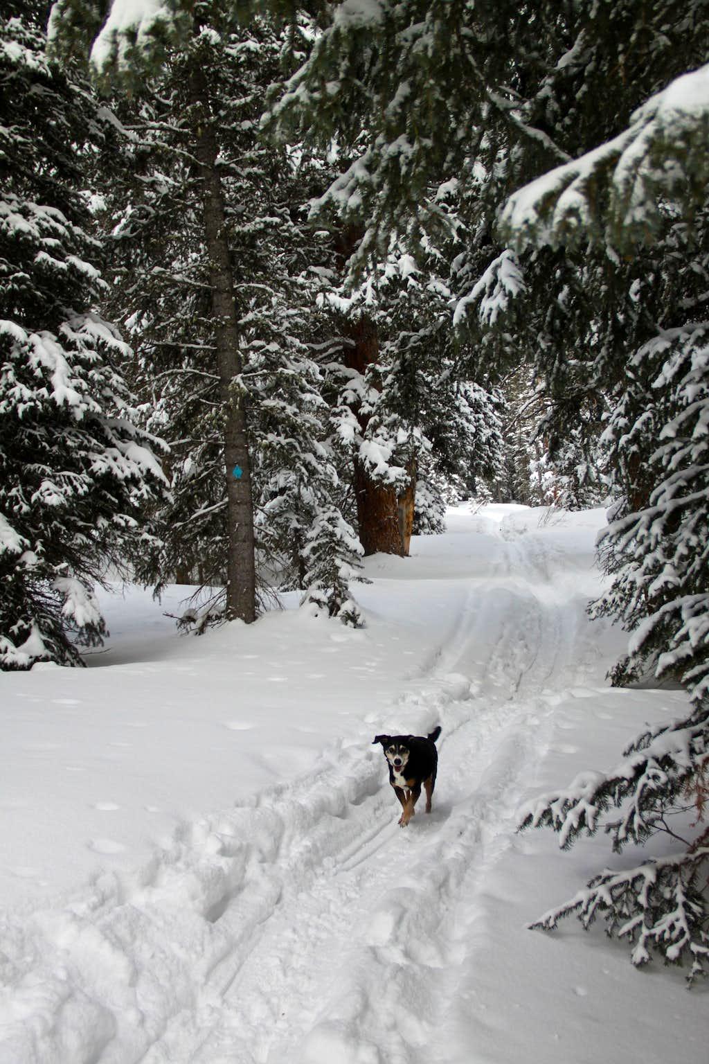 Endless pretty trails