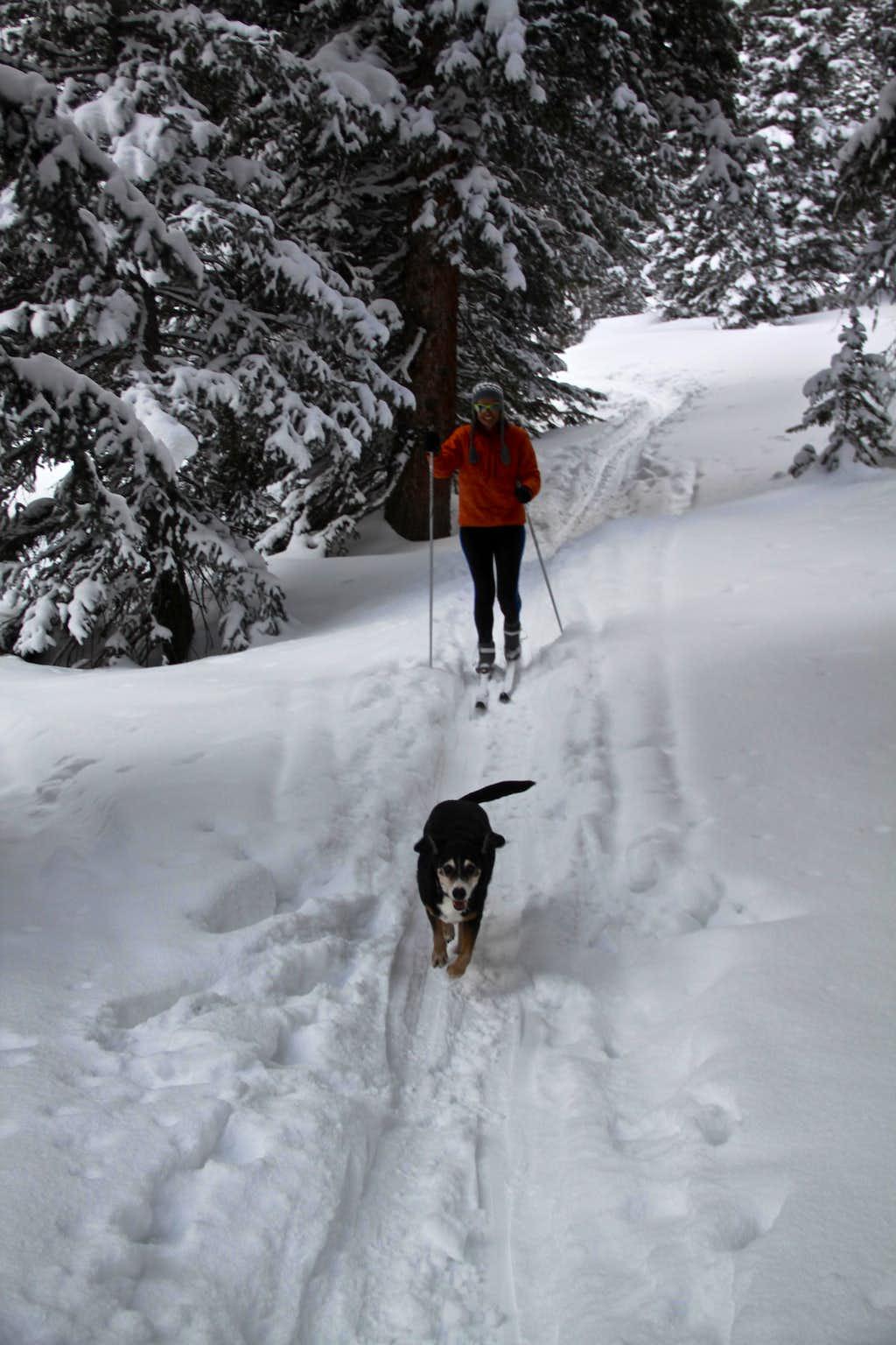 Lake Ward Trail System