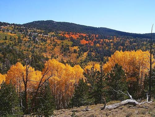 Bright Aspen Colors