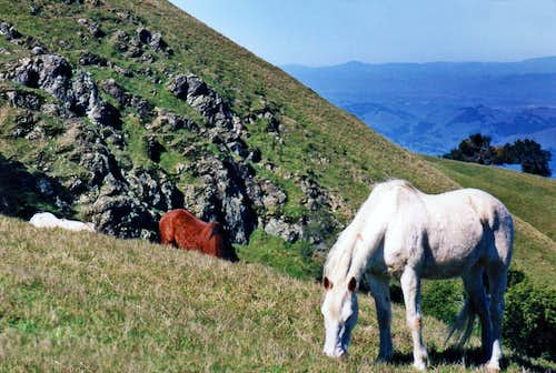 Horses on Big Rock Ridge