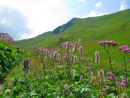 Nice plants and flowers in Siroka Valley