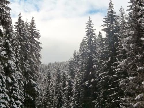 Snowcovered trees on the way up