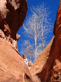 The cottonwood tree below rappel 2