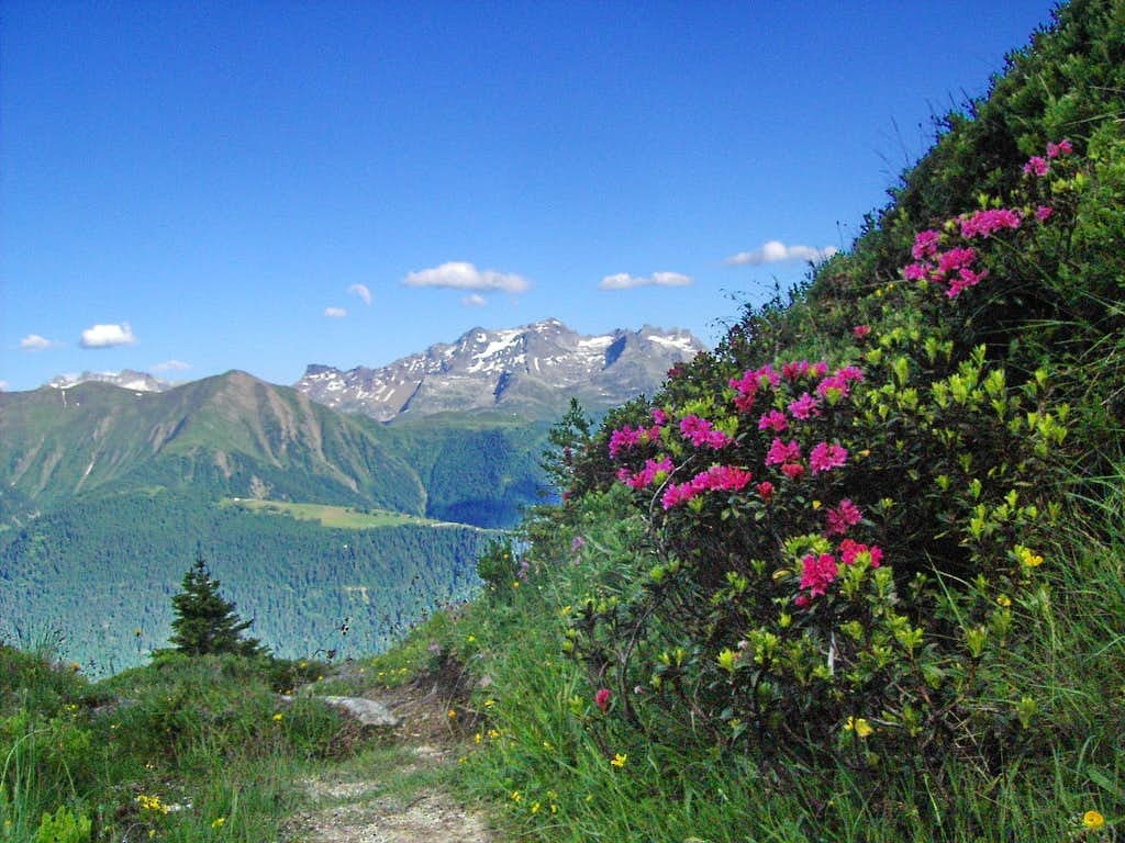Schwarzhorn and rhododendrons