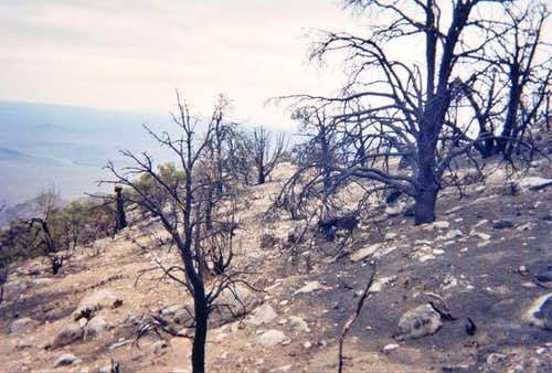The burned-out area along the...