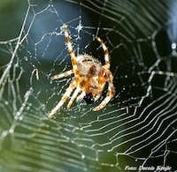 The spider eats fly