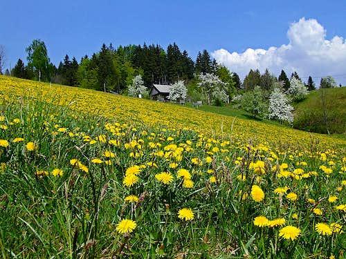 Spring in Rovte