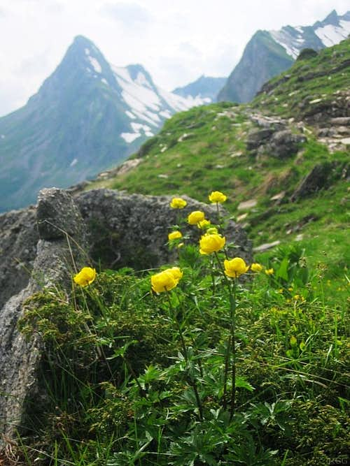 Alpine flowers and Glegghorn