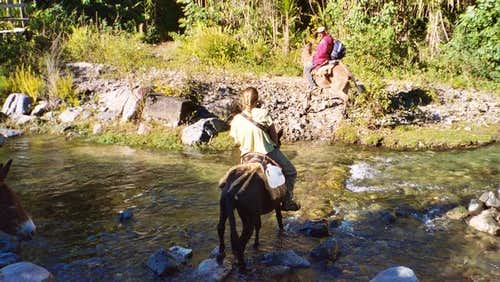 Mules can aid in the stream...