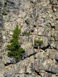 Kings Canyon Wall with Tree