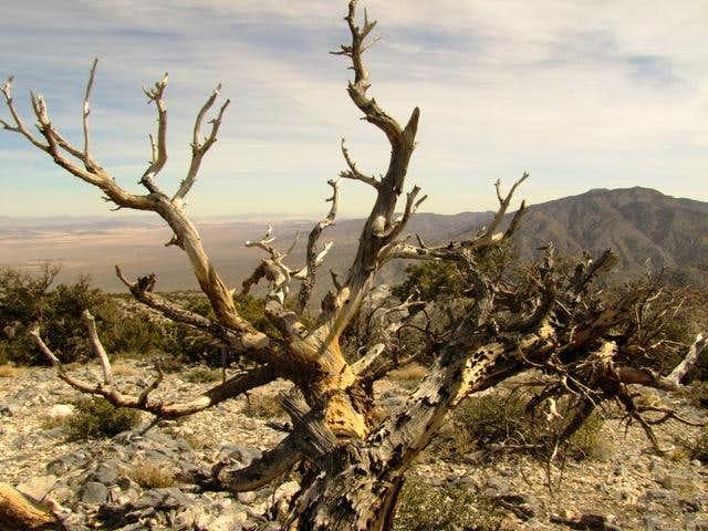 Silver Peak Tree Sculpture