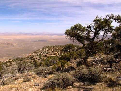 View northeast of Silver Peak