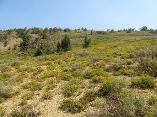 the now trailless south slopes of Big Elk