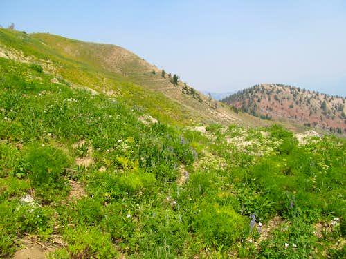 descending dry slopes