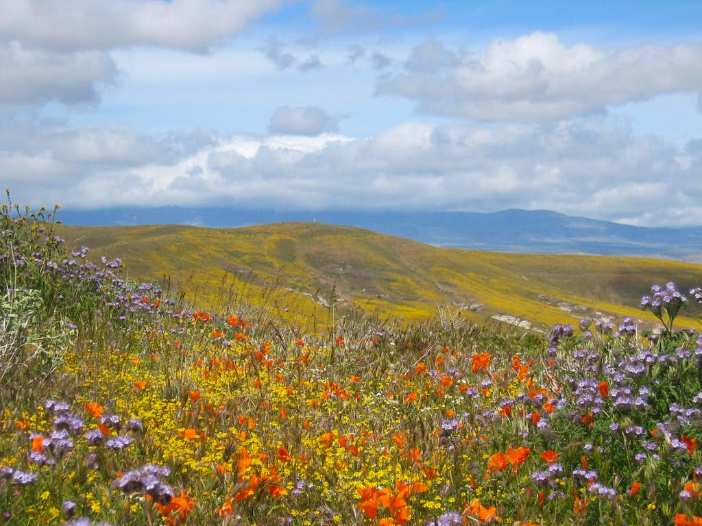 Desert Wildflower Bloom – Antelope Valley California Poppy Reserve