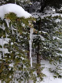 cool icicle