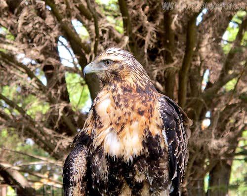 Gorgeous bird...