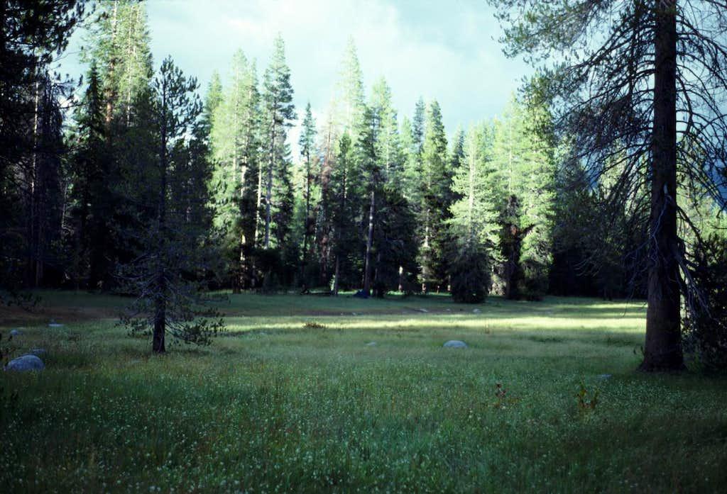 Camp I Meadow