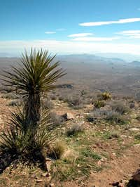 View from Ryan Mountain to...