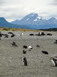 Tierra del Fuego Province