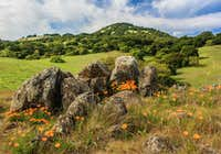 Spring on Sonoma and Burdell Mountain
