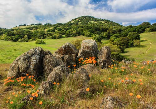 Poppies, rocks and Burdell Mountain