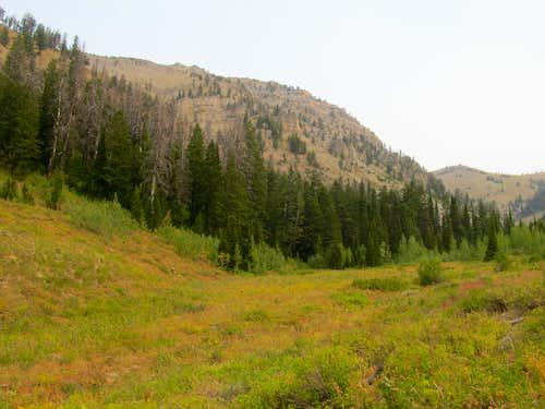 flanks of Sheep Creek Peak