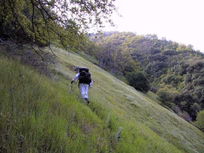 A steep hillside early on the...