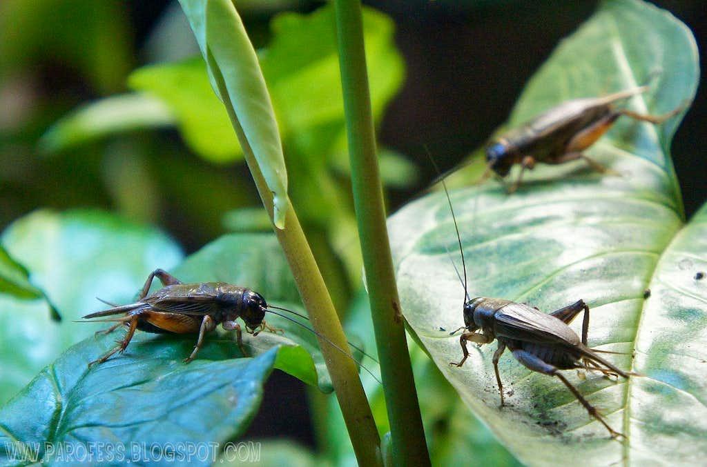Crickets...