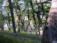 Cerro Bella Vista Trail