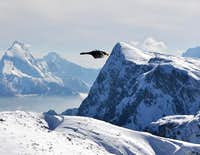 """Air Untersberg"" - Watching the alpine choughs on Salzburger Hochthron"
