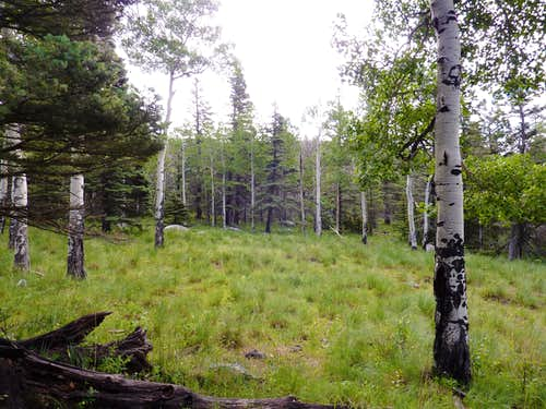Glades of Aspen