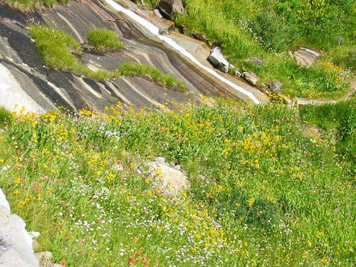 High Sierra Trail Hamilton Lake Lush Hillside Greenery and Flowers