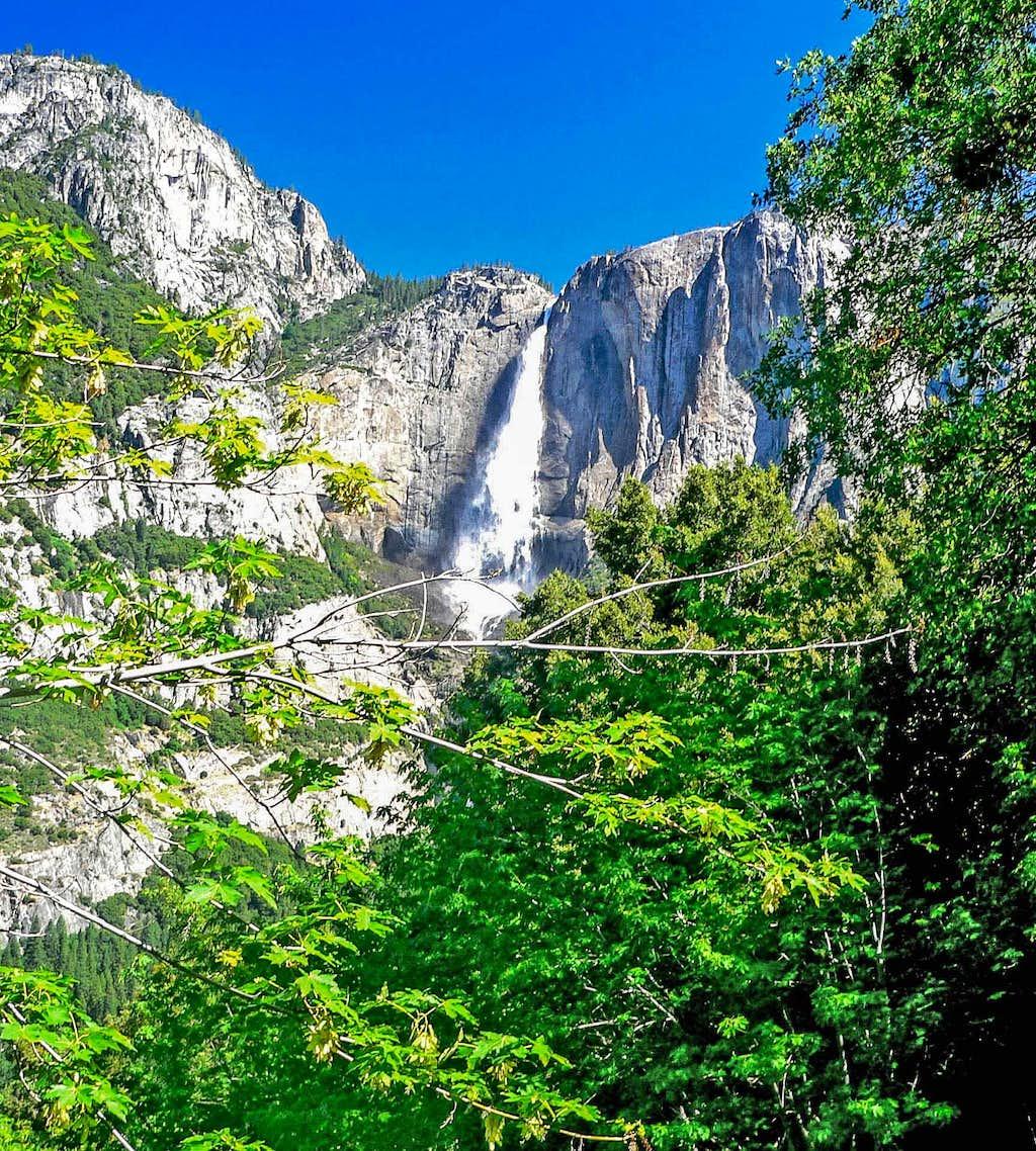 Yosemite Falls through spring oaks