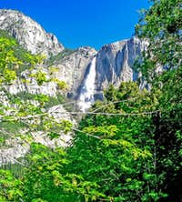 Yosemite Falls through spring oaks