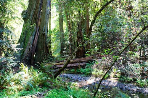 Muir Woods National Monument Redwood Creek