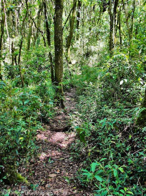 Very enjoyable trail...
