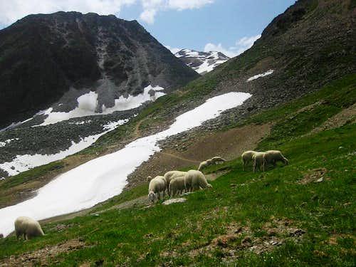 Schwarzseekogel (2931m) and Schwarzkogel (3015m) from next to the Rotkogeljochhütte