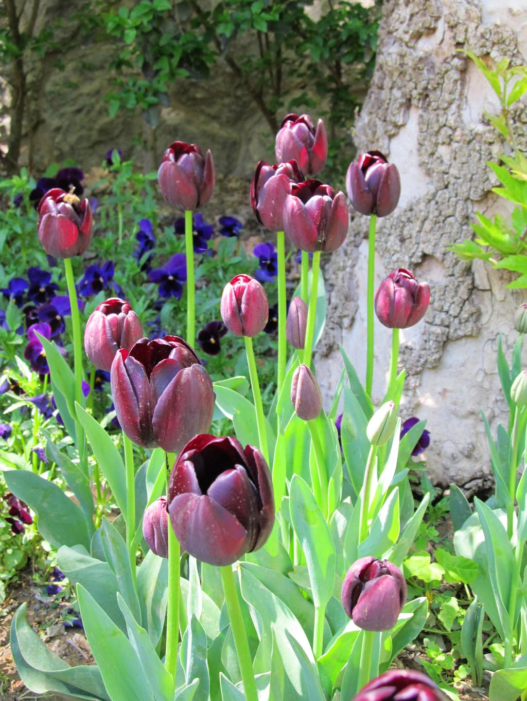 Jamshidie Garden