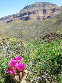 Dutchman, Bull Pass & Black Mesa Trails