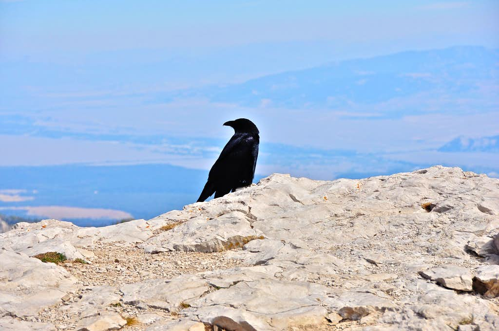 Crow on the top of Corbet's Rock