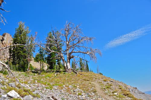 dear tree near the end of the hike