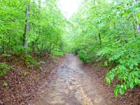 on the soggy trail to Driskill Mountain